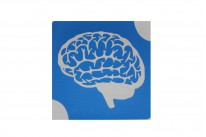 Мозг ( 6*6 см )